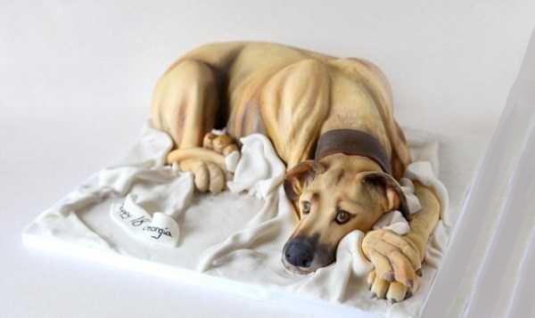 تزيين 6 - کیک های تزیین شده شبیه حیوانات واقعی + تصاویر