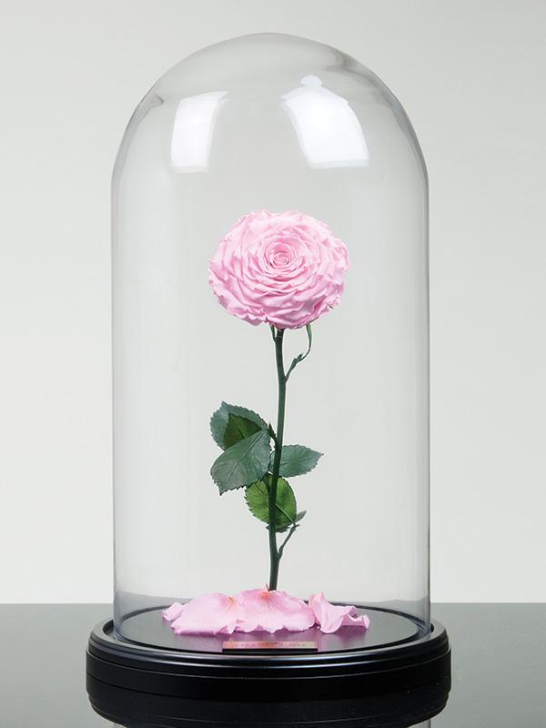 4 - روش های خشک کردن دسته گل عروس