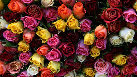 5 - دسته گل خواستگاری خاص یا سبد گل خواستگاری با گل مناسب ؟
