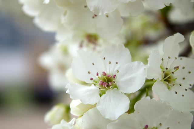 سفید - گل هایی برای میهمانی ایرانی