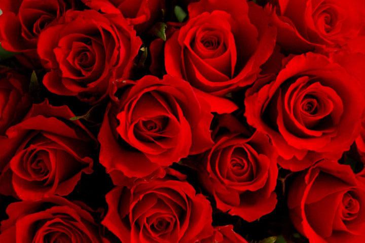 red roses - ایده هایی عاشقانه برای سورپرایز کردن شخصی که دوستش دارید