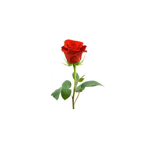 rose irani bankgol 600x600 - تبریک تولد این بار از راه دور ، 15 ایده ی تبریک تولد